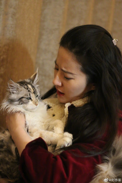 liu yifei animals