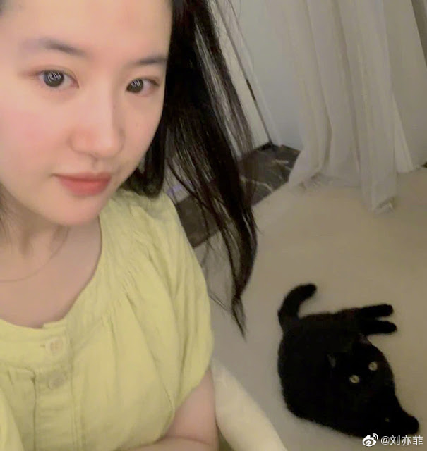 liu yifei black cat