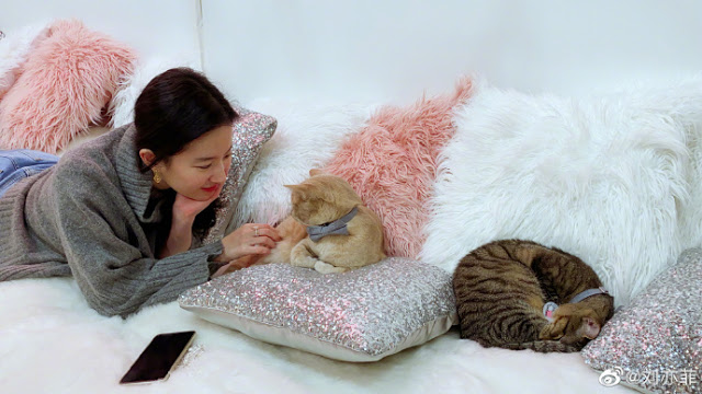 crystal liu yifei cat lady