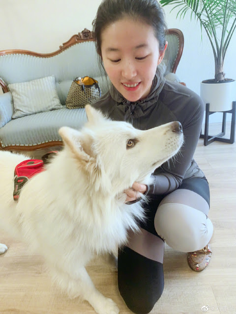 crystal liu dog