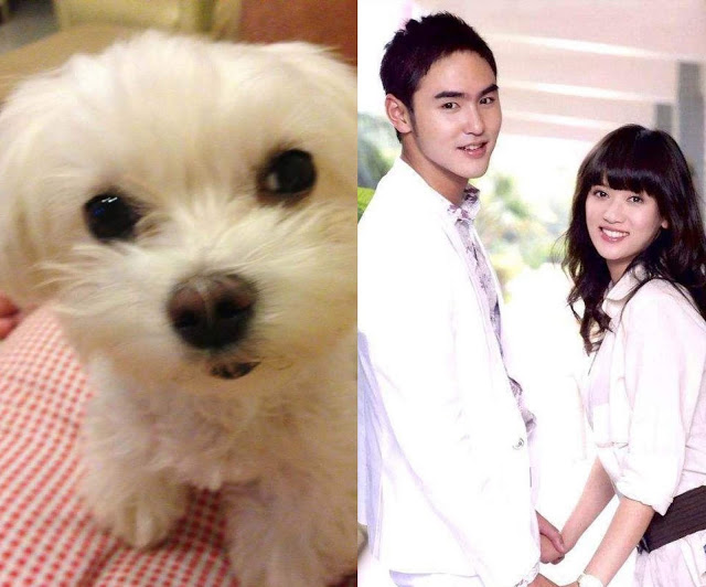 joe chen fated to love you puppy