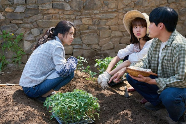 film review k movie little forest